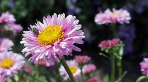 nature-flowers-garden-spring